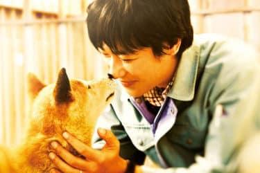 名優犬が演じていた『ひまわりと子犬の7日間』